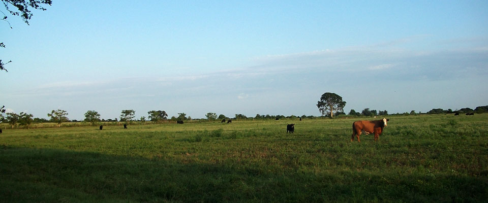 farm-cow-slide