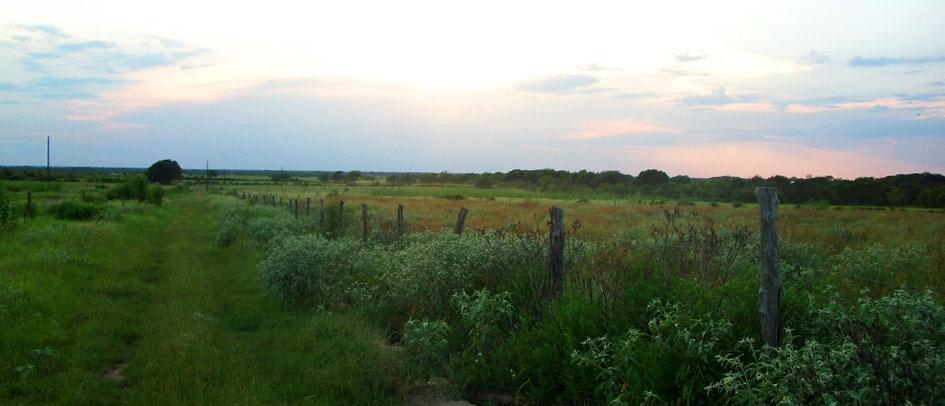 farm-pasture